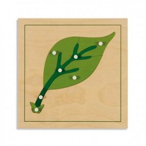 Puzzle hoja, GM214CN00, material montessori, botánica, material escolar infantil.