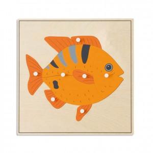 Puzzle pez, GM2163N00, material montessori, biología, material escolar infantil.
